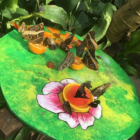 Casa delle Farfalle e Bosco delle Fate di Butterfly Arc: photo1.jpg