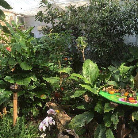Casa delle Farfalle e Bosco delle Fate di Butterfly Arc: photo2.jpg