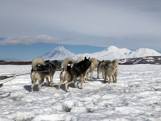 Petropavlovsk-Kamchatsky, Russland: Прогулка на нарте к берегу Тихого океана
