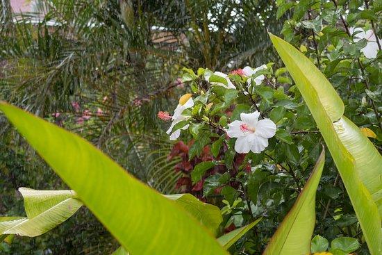 Hotel Manutara: A glimpse into the garden in the rain