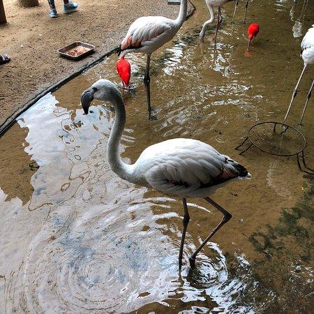 Parque das Aves – fénykép