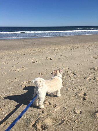 Bay Head, NJ: Pet allowed but must be leashed!