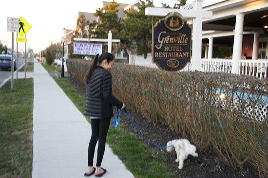 Bay Head, NJ: Plenty of grass area for the dogs!