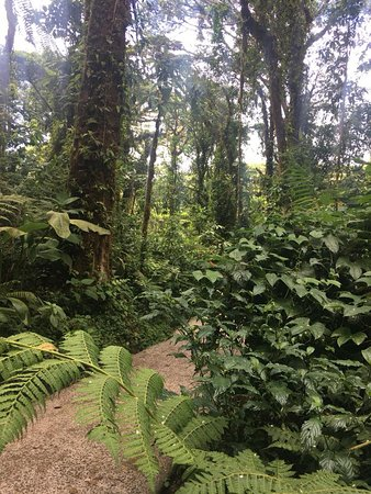 Santa Elena Cloud Forest Reserve: walking path