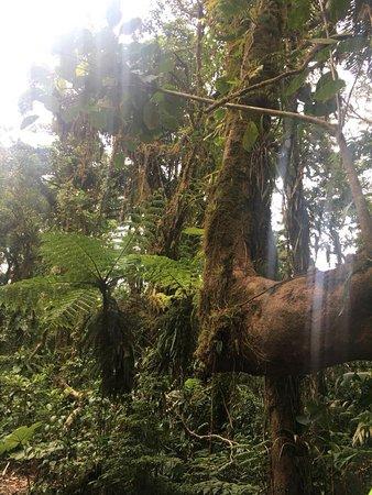 Santa Elena Cloud Forest Reserve: rainforest