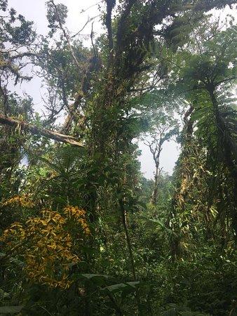 Santa Elena Cloud Forest Reserve: tropical plants