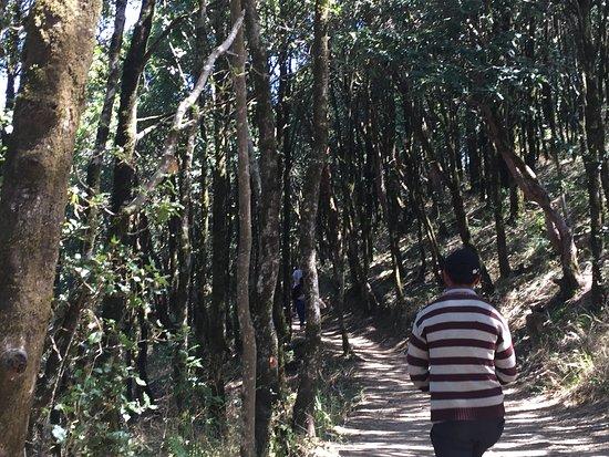 Mukteshwar Mahadev Temple: walk thru the forest