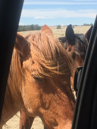 Deer Trail, CO: Mustang Greeting