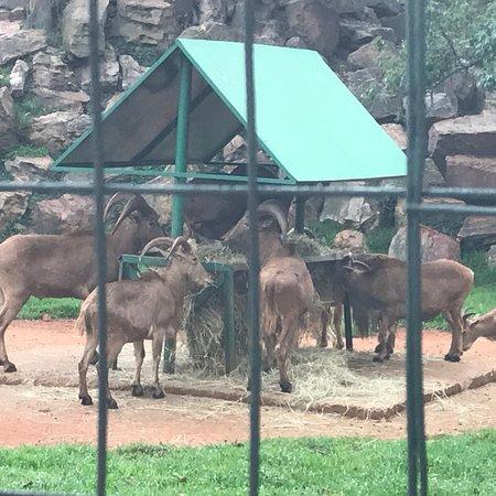 Johannesburg Zoo : photo0.jpg