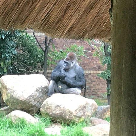 Johannesburg Zoo : photo2.jpg
