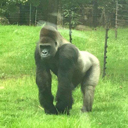 Johannesburg Zoo : photo3.jpg