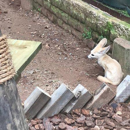 Johannesburg Zoo : photo4.jpg