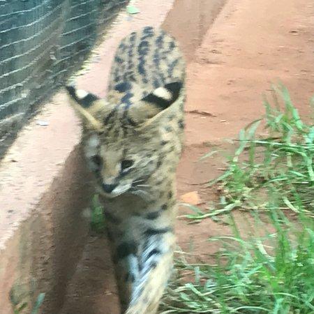Johannesburg Zoo: photo5.jpg