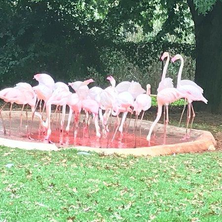 Johannesburg Zoo: photo6.jpg