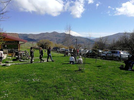 Villa Ribot  Floresta