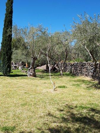 Santa Maria di Licodia, Italia: IMG_20180402_125345_large.jpg