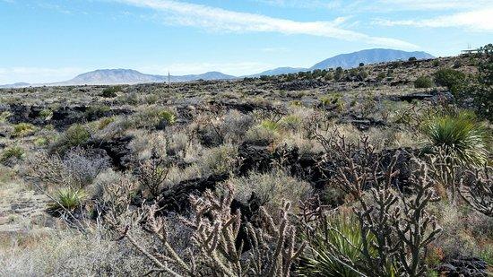 Carrizozo, Нью-Мексико: Joshua trees grow in the flow
