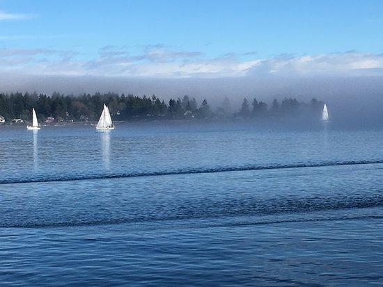 Sailboats coming into Nanaimo harbour