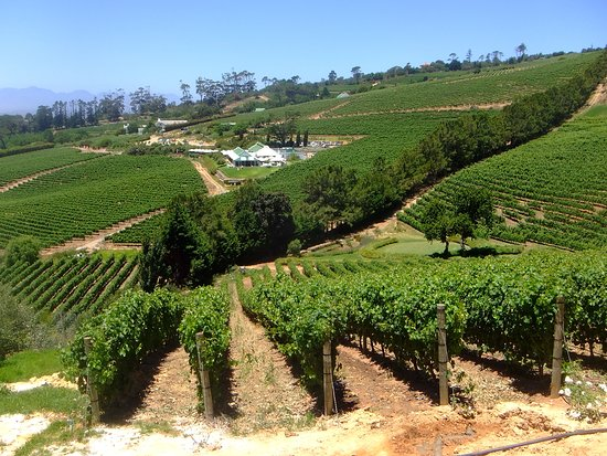 Constantia, South Africa: view from restaurant 2
