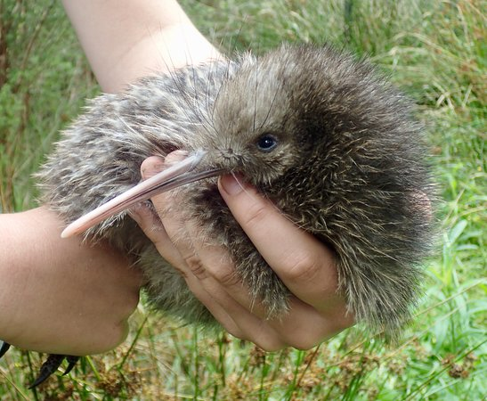 The Farm at Cape Kidnappers: Kiwi Discovery Walk