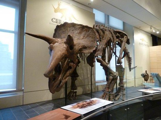 Ottawa, Canadá: Dinosaure