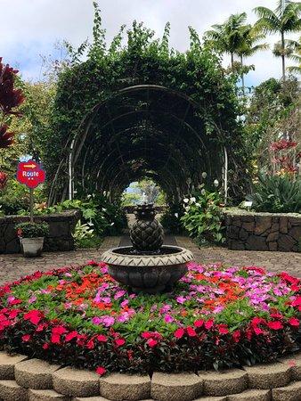 Holualoa, HI: Beautiful flowers