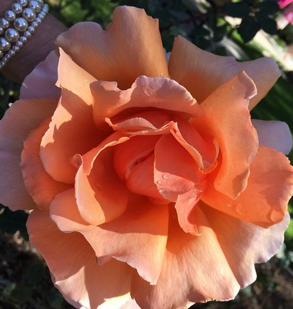 Yorba Linda, CA: from the Patricia Nixon Garden