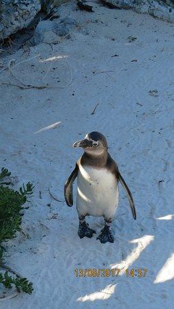 Boulders Beach Penguin Colony: Penguin Colony