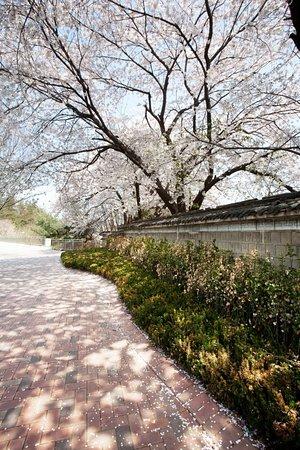 Bilde fra Grand Hyatt Seoul