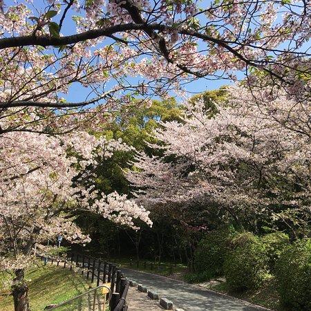 福岡の桜の名所