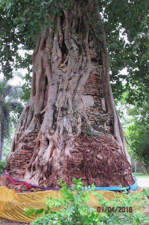 Wat Naphrameru : ด้านหลังพระอุโบสถ