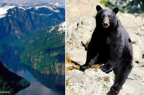 Prince of Wales Island Bear-Viewing Tour By Air From Ketchikan