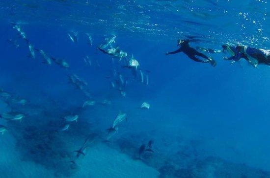 Kona Wild Dolphin and Reef Snorkeling...
