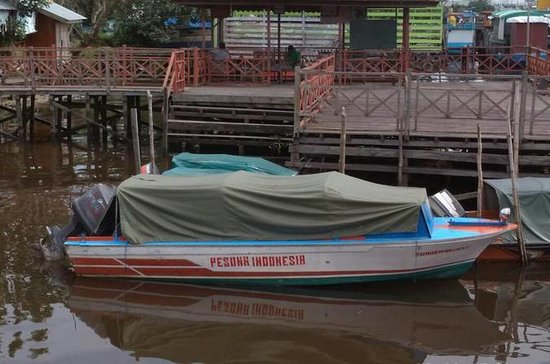 En dags orangutangtur med fartbåt