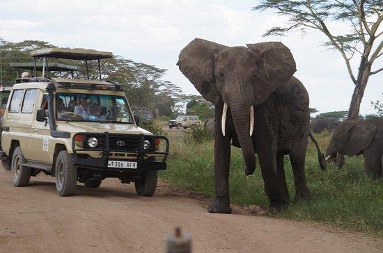 3 Dagen Serengeti en Ngorongoro ...