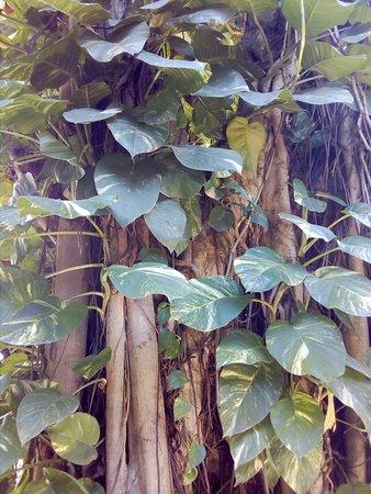 Hotel Casa Tucan: Un hermoso árbol de este hotel.
