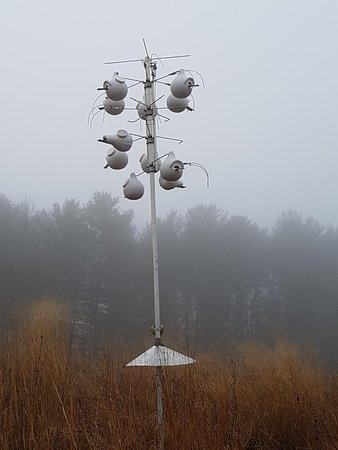 Audrey Carroll Audubon Sanctuary: Martin bird houses (I think)
