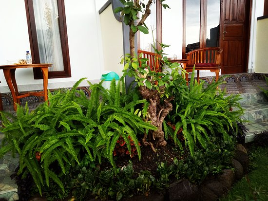 Aris Homestay and Warung Made: porch and ferns at Aris Center Homestay, Munduk, Bali