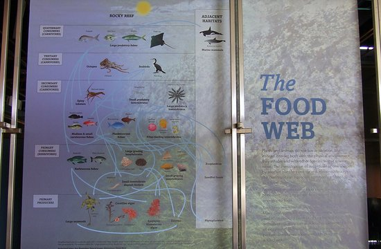 Goat Island Marine Discovery Centre: Poster