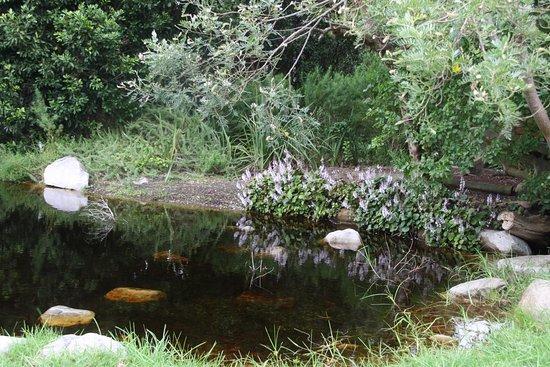 Harold Porter National Botanical Gardens: Spiegelung