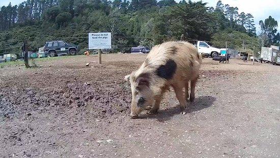 Stu's Wild Pig Farm