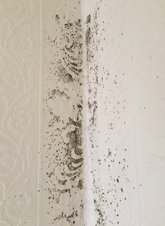 Mold on the wallpapers of the corners of our bedroom