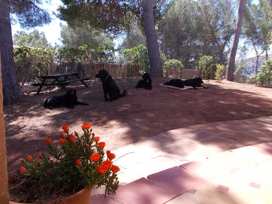 Playa La Granadella : Dog Friendly Rental Villa, as even pets like to be on Holiday with you.