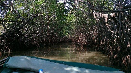 Pichavaram, Indien: Mangroves