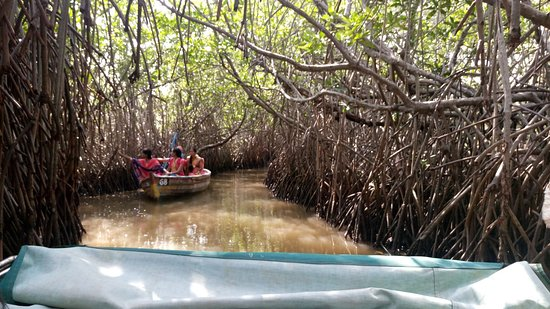 Pichavaram, Ấn Độ: Mangroves with local boat