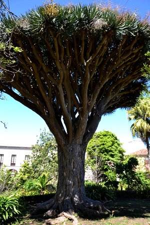 La Orotava, España: The Botanical Garden impression