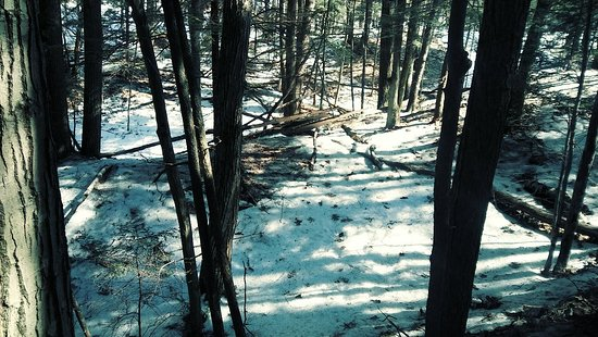 Petoskey State Park : 20180402_114154_Film3_large.jpg