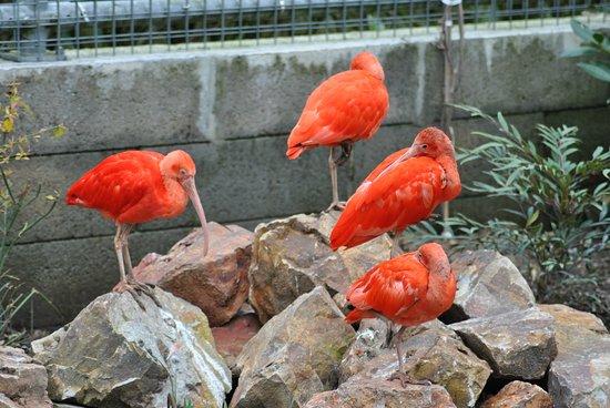 Jurques, Fransa: Ibis