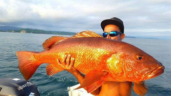 Nosara, Costa Rica: big game at the reef