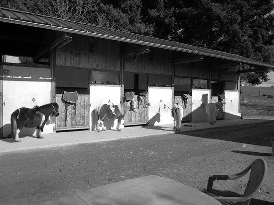 Marsac-en-Livradois, France: Préparation des poneys